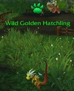 wildhatchling